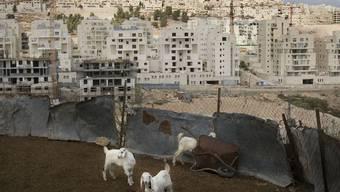 Der Siedlungsbau ist ein Streitpunkt der Nahost-Friedensverhandlungen (Archiv)