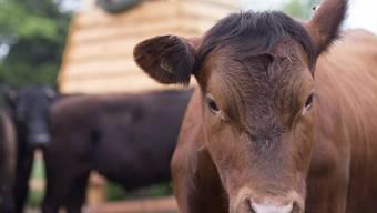 Ein geschlossener Kreislauf: Jedes Tier, das beim Biobauern Nils Müller zur Welt kommt, stirbt auch bei ihm.