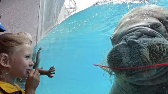 Besucher können im Moskauer Zoo wieder Tiere bestaunen (Archiv)