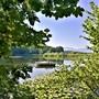 Im warmen Juli boten Spaziergänge entlang von Gewässern etwas Abkühlung - hier im Bild der Stinibühlweiher. (Leserbild: Urs Gutfleisch, Sempach, 24. Juli 2019)