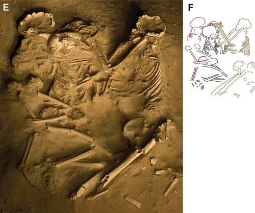 Dreifachbestattung in der Sahara. Skizze F zeigt die Zugehörigkeit der Knochen: Rot ist das Skelett des 5-jährigen Kindes gefärbt, schwarz jenes des 8-jährigen.