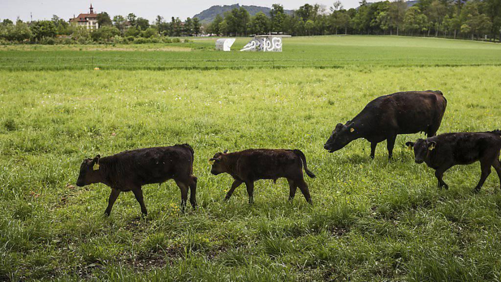 Wo heute Kühe weiden, könnten schon bald die Bagger auffahren. (Archivbild)