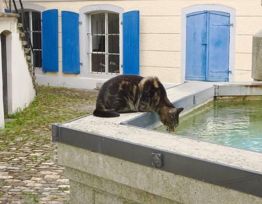 Diese Katze erfrischt sich am Brunnen!
