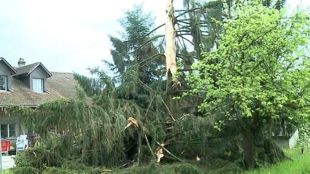 Baum von Blitz gesprengt