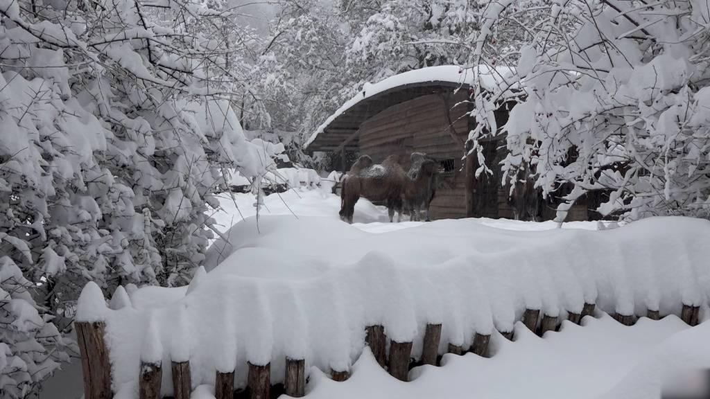 Zoo Zürich unter dicken Schneedecke