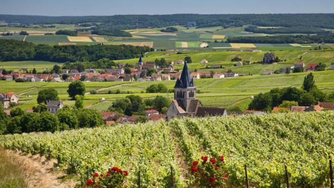 Reben, so weit das Auge reicht. In akkurat geschnittenen Bahnen legen sie sich sanft über die Hügel der Champagne. Foto: Sylvain Sonnet/hemis.fr/laif