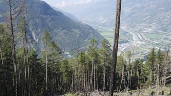 Abgebranntes Waldstück bei Visp im Wallis (Archiv)