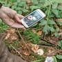 Als Ergänzung ja – aber niemals als einziger «Experte»: Pilz-Apps auf dem Handy sind mitunter nicht zuverlässig genug.