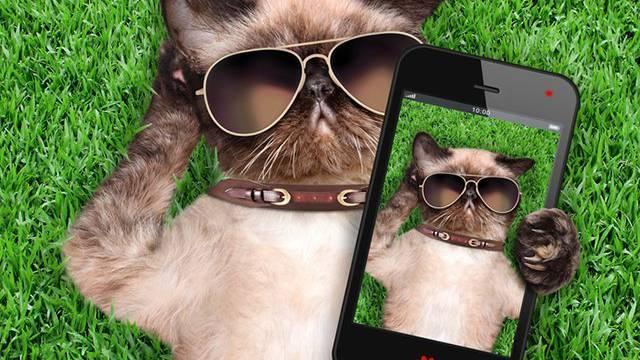 Katzen können nervig sein - auch im Whatsapp.