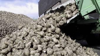 Biozuckerrueben bei der Anlieferung (Archivbild)