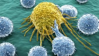 Lymphozyten (gehören zu den weissen Blutkörperchen) greifen eine Krebszelle an. Ihre Hauptaufgabe ist schliesslich: Fremdstoffe erkennen und entfernen.Fotolia