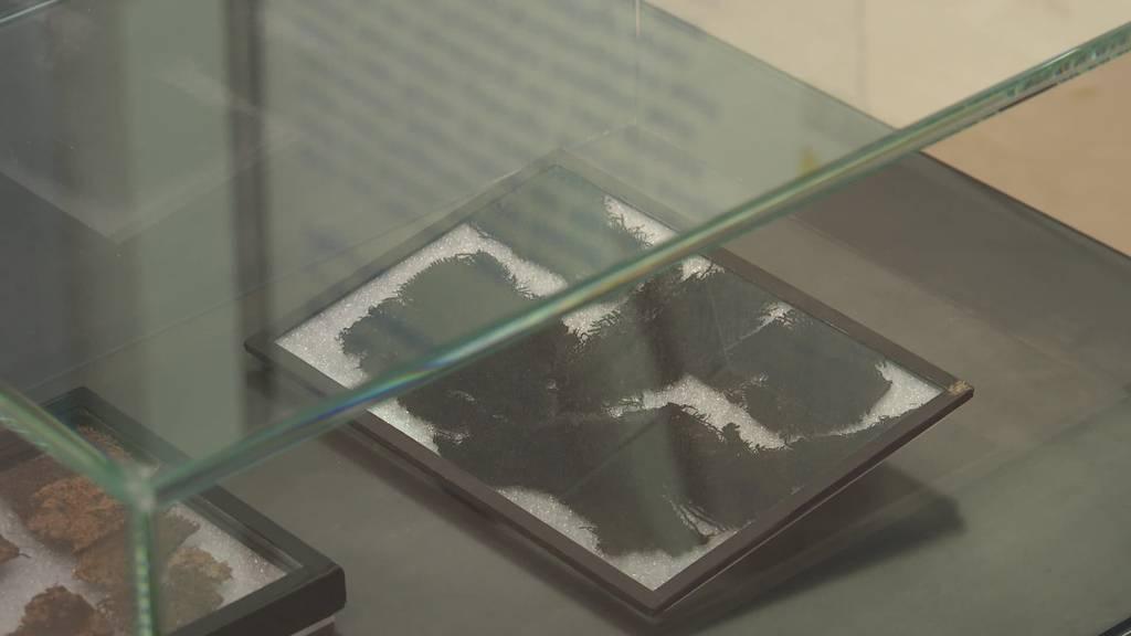 Mittelalter am Bodensee: Antike Fässer und Münzen im Museum