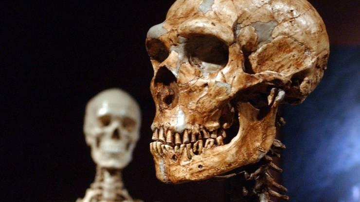 Der Austausch mit dem Neandertaler (Skelettnachbidung rechts im Bild) hat zur Evolution des Immunsystems des modernen Menschen (Hintergrund) beigetragen. (Archiv)