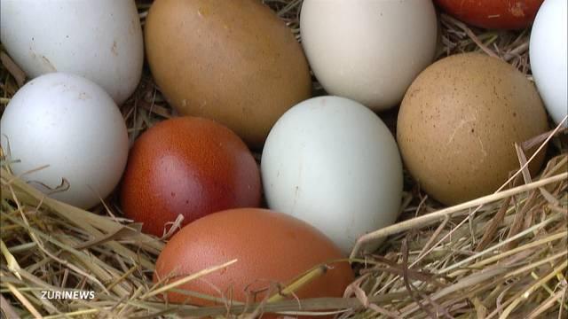 Hühner, die farbige Eier legen?