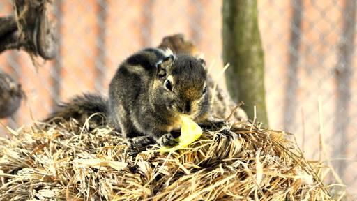 Ostschweizer Zoos erwarten keine Warteschlangen