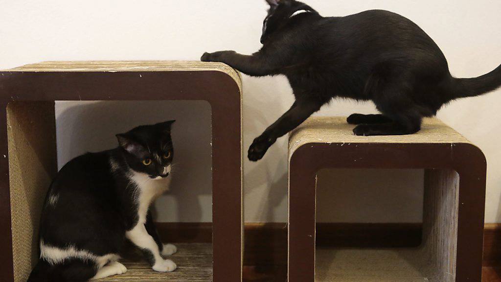 Katzen retten Hausbesitzern in Italien bei Erdrutsch das Leben