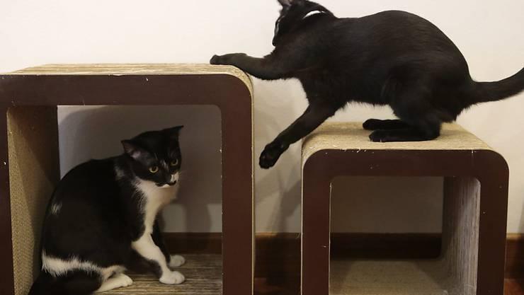 Die Katzen Simba und Mose haben ihren Menschen das Leben gerettet. (Symbolbild)