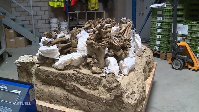 Steinzeitliche Gräber zurück in Lenzburg