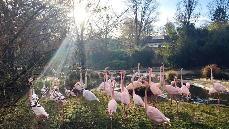 Der Zoo Basel verzeichnet einen Anstieg der Besucherzahlen im Jahr 2019. (Archivbild)