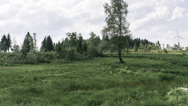 Das Moor in Finsterwald im luzernischen Entlebuch ist ein Flachmoor von nationaler Bedeutung. (Archivbild vom Juni 2016)