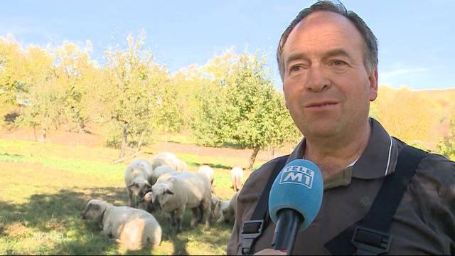 Aargauer zahlen für das von Asylbewerbern geschächtete Schaf