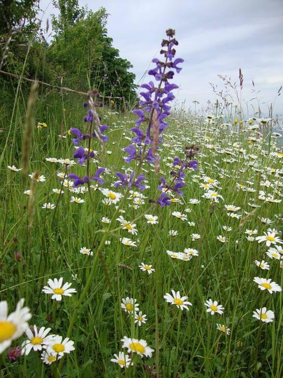 Die schönsten Blumenwiesen (© Pro Natura St.Gallen-Appenzell)