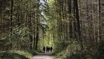 4,4 Millionen Franken für die Waldpflege in den Jahren 2020 bis 2023. (Themenbild)