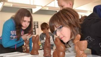 Schauen, schnüffeln, probieren: Die Schüler testen die sieben Schoggi-Hasen auf Verpackung und Geschmack.