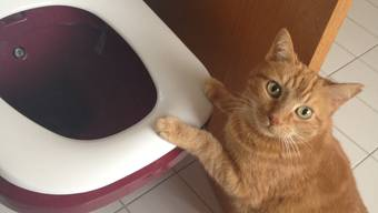 Wer hat die Toilette wieder mal nicht geputzt?
