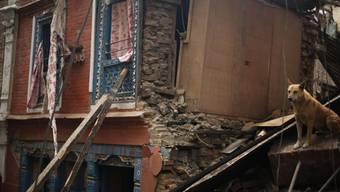 Schweres Erdbeben in Nepal fordert hunderte Tote