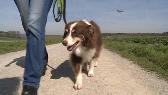 Tiertransport-Experte Marcel Brozius verrät in derSendung «tierisch» auf Tele M1, worauf bei Flugreisen ins Auslandmit dem Vierbeinerzu achten ist.