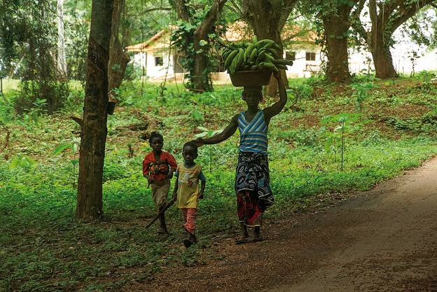 Mit einer Mischkultur will Hiestand den degradierten Boden wieder aufbauen.
