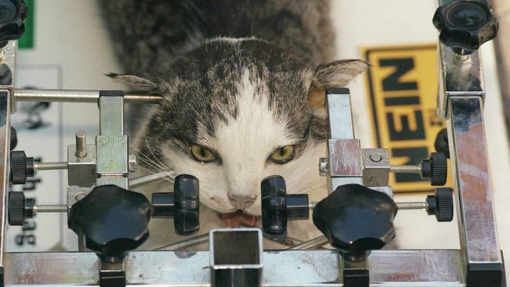 Kompetenzzentrum 3RCC fördert Reduktion von Tierversuchen