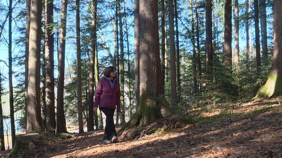Wellness im Wald – Erholung für Körper und Geist durch Waldbaden