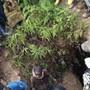 HANDOUT - Menschen versammeln sich am Ort des Einsturzes der Goldmine. Foto: Jeff Mwenyemali/Maisha RDC/AP/dpa - ACHTUNG: Nur zur redaktionellen Verwendung im Zusammenhang mit der aktuellen Berichterstattung und nur mit vollständiger Nennung des vorstehenden Credits. Keine Verwendung nach dem 26.09.2020.