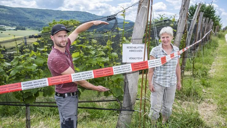 In ihrem Rebberg zeigen David und Claudia Gschwind wo massiv Rebenblätter gestohlen wurden.