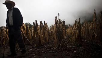 Die Dürre macht den Landwirten zu schaffen. (Archiv)
