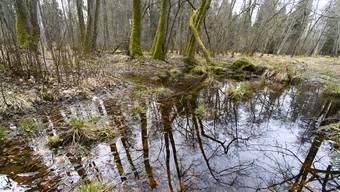 Das Egelmoos ist ein Feuchtgebiet im Wald zwischen Niederrohrdorf und Mellingen.
