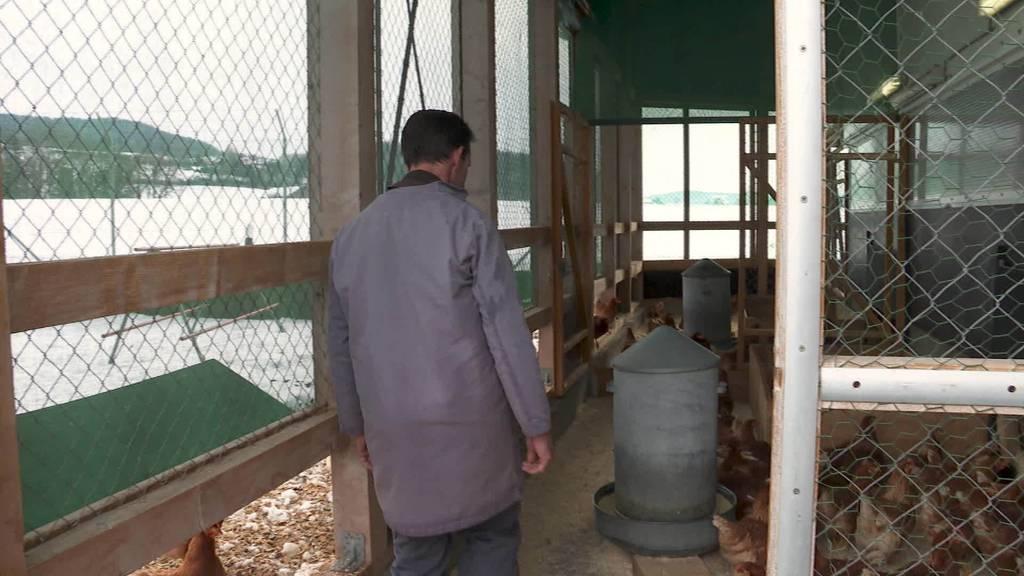 Die Vogelgrippe ist zurück: Neue Massnahmen ab Montag