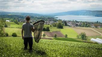 Patrick Züst unterwegs im Aargau als Schmetterlingsfänger.