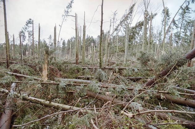 Der Sturm der Stürme richtete riesigen Schaden an.