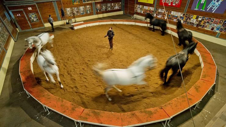 Im Holzschuppen, in dem Franziska Nock mit ihren Pferden trainiert, hängen Fotos und Plakate von 143 Jahren Zirkusgeschichte. Nock ist der älteste Zirkus der Schweiz.