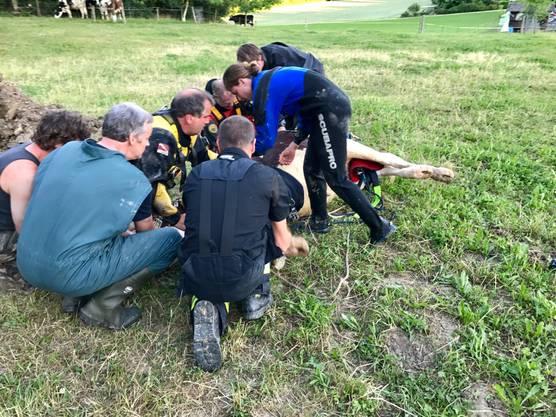 Rind Belinda fiel in ein Erdloch und musste von Feuerwehr und Grosstier-Rettungsdienst geborgen werden.