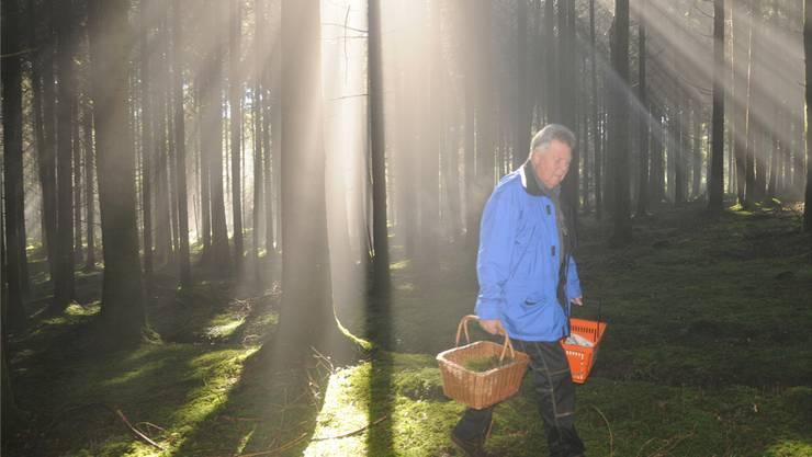 Im Wald werden von Mitgliedern des Pilzvereins Seetal, hier Jeff Hegi, Pilze für die Ausstellung in Meisterschwanden gesucht.