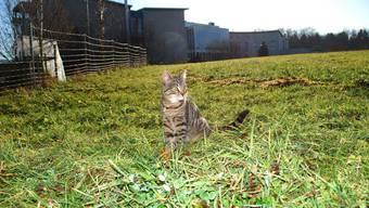 Warten auf die zukünftige Wohnung: Diese junge Katze besetzt schon mal die (geplante) Stube.  (Eddy Schambron)