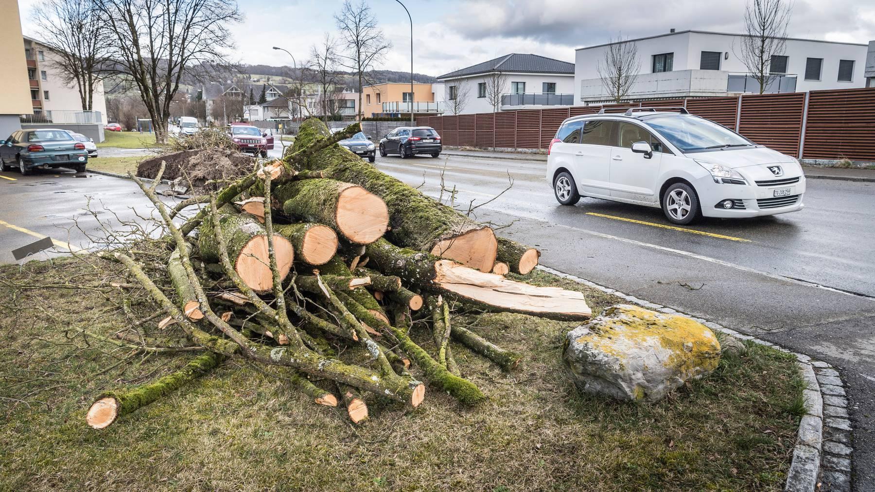 Sturm Sabine wütete im Februar schweizweit, wie hier in Weinfelden. Trotzdem hielten sich die Unwetterschäden für die Mobiliar im ersten Halbjahr 2020 in Grenzen.