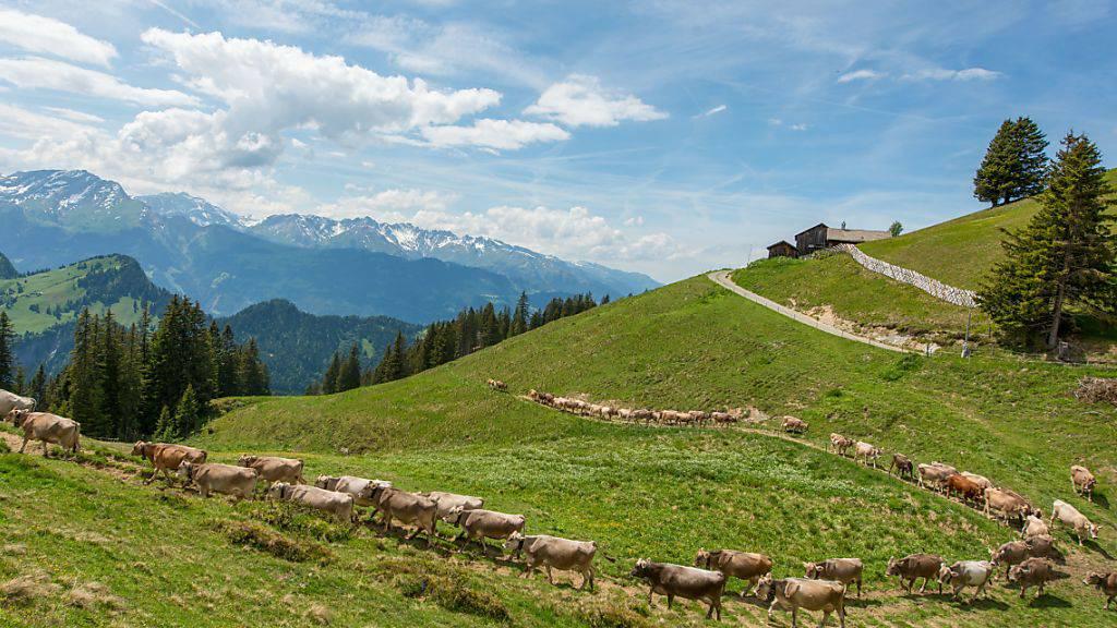 Viehtrieb auf der Alp Rona in Furna im Prättigau: Auch dieses Gebiet würde Teil des Internationalen Naturparks Rätikon.