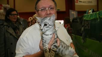 An der Internationalen Katzenausstellung buhlen Divas um Ruhm und Ehre
