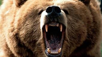 Grizzly-Bär tötet Wanderer