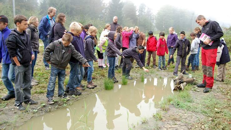 Gross ist die Aufregung der Fünftklässler von der Regionalschule Lenzburg am Tümpel mit den Gelbbauchunken.  HH.